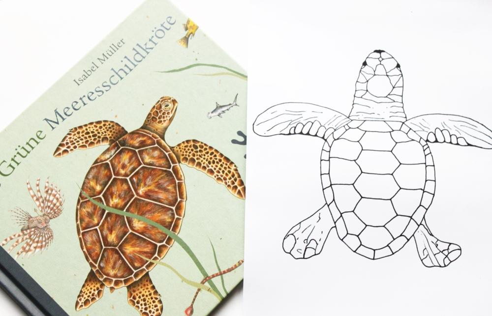"""Ausmalbild (A4 und A5) """"Die Grüne Meeresschildkröte"""" – buchidee"""