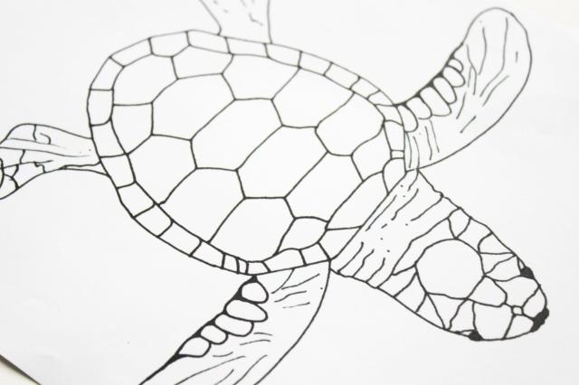 Wunderbar Süsse Meeresschildkröte Färbung Seite Zeitgenössisch ...