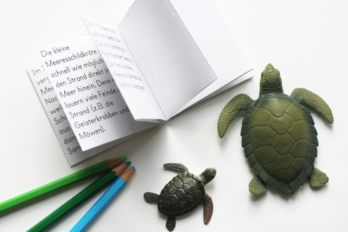 Großartig Ausmalbilder Der Meeresschildkröten Zeitgenössisch - Entry ...