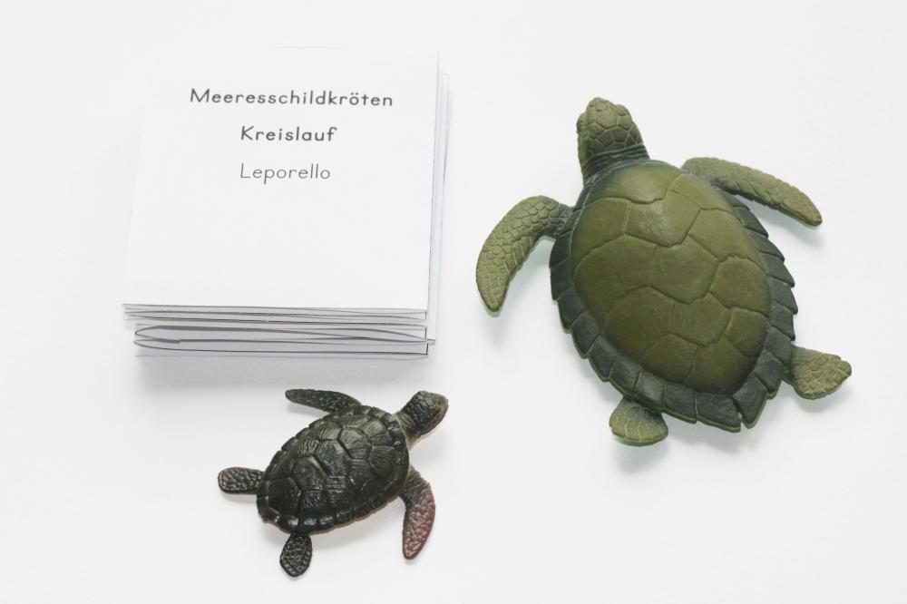 Fein Die Anatomie Der Meeresschildkröten Zeitgenössisch ...