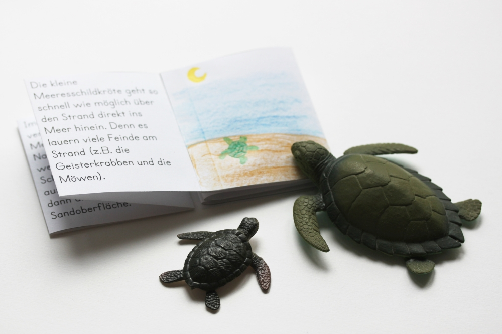 Wunderbar Grüne Meeresschildkröte Malvorlagen Fotos - Druckbare ...